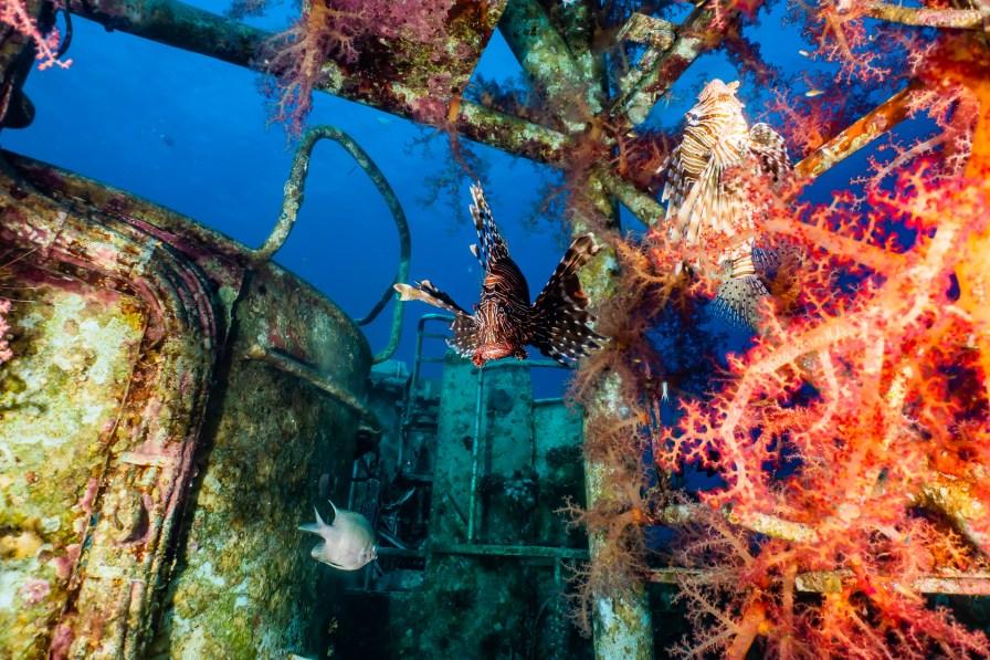 September dive destinations