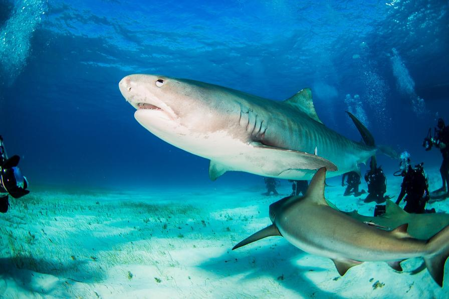 safely photograph sharks