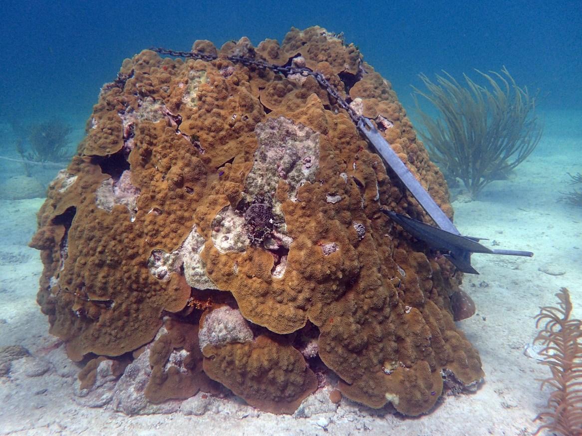 Florida Keys restoration blueprint