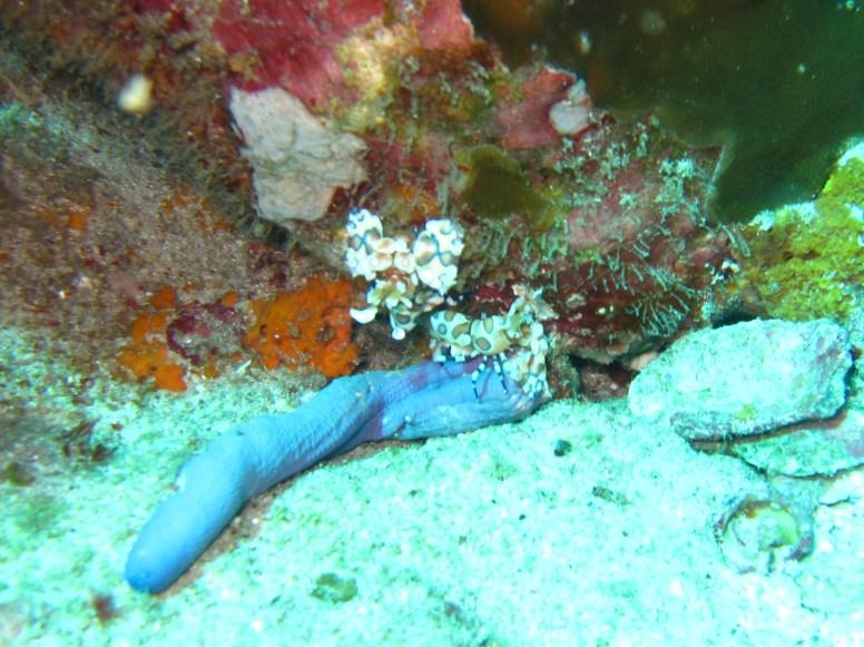 scuba diving in the Similan Islands