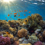 Covid coral reef
