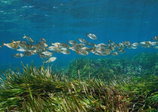 seagrass dive community