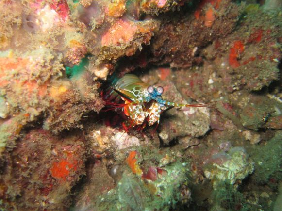 diving in sulawesi