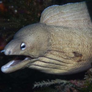Scuba diving Poor Knights Islands New Zealand