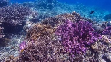 Halmahera coral reef