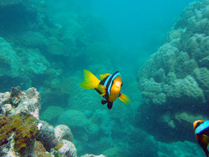New Zealand Sea Adventures, Wellington Diving Adventures