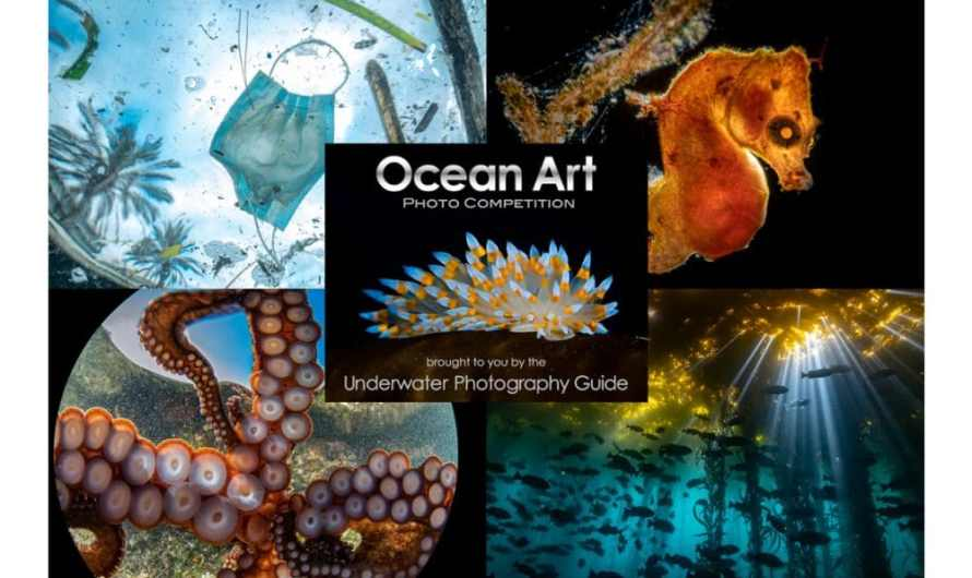 Ocean Art 2020 Winners Announced!