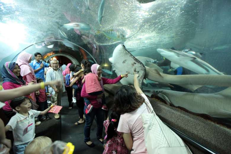 Diver safety risked in ray-death aquarium