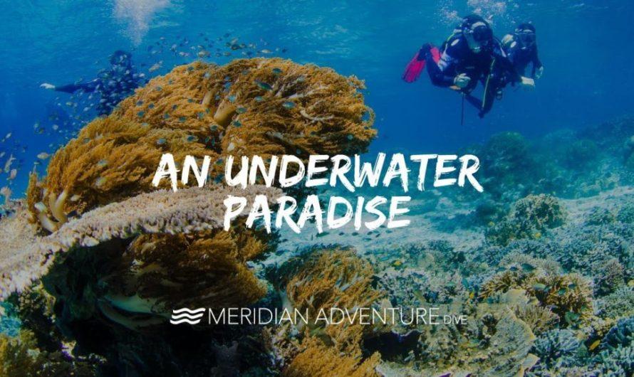 An Underwater Paradise