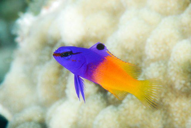 Funny Fish Names