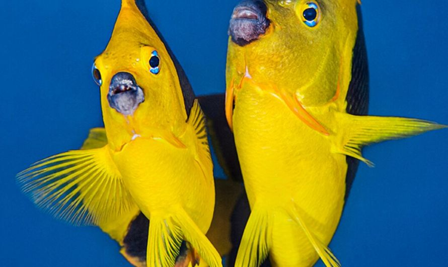 Tips for Capturing Photos of Marine Animal Behavior