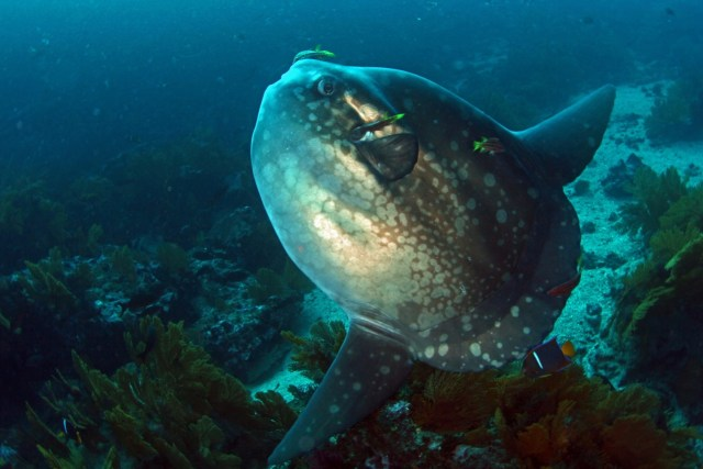How Not to See a Mola Mola in Bali
