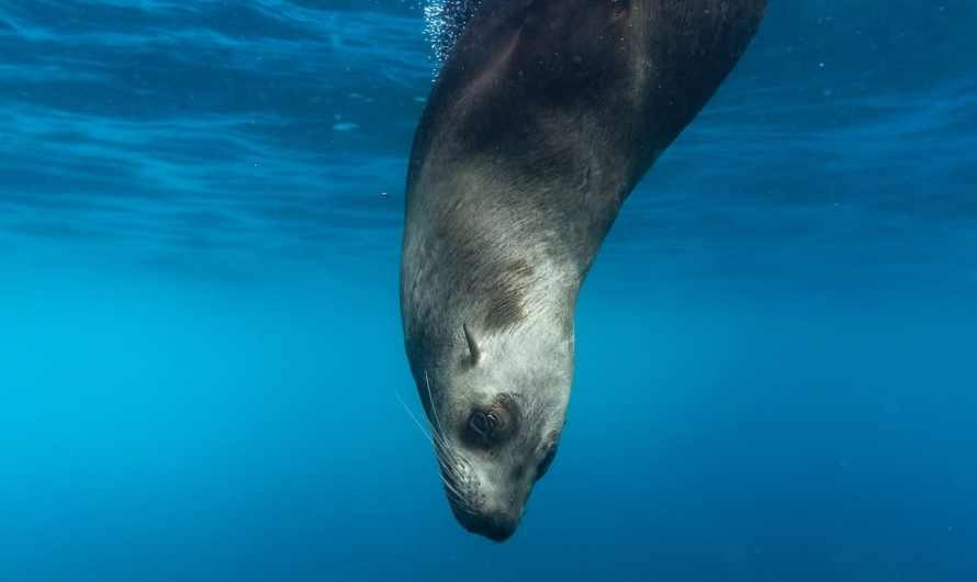 8 great places to go snorkeling with seals and sea lions