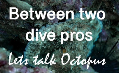 Between Two Dive Pros – Diving With Octopus