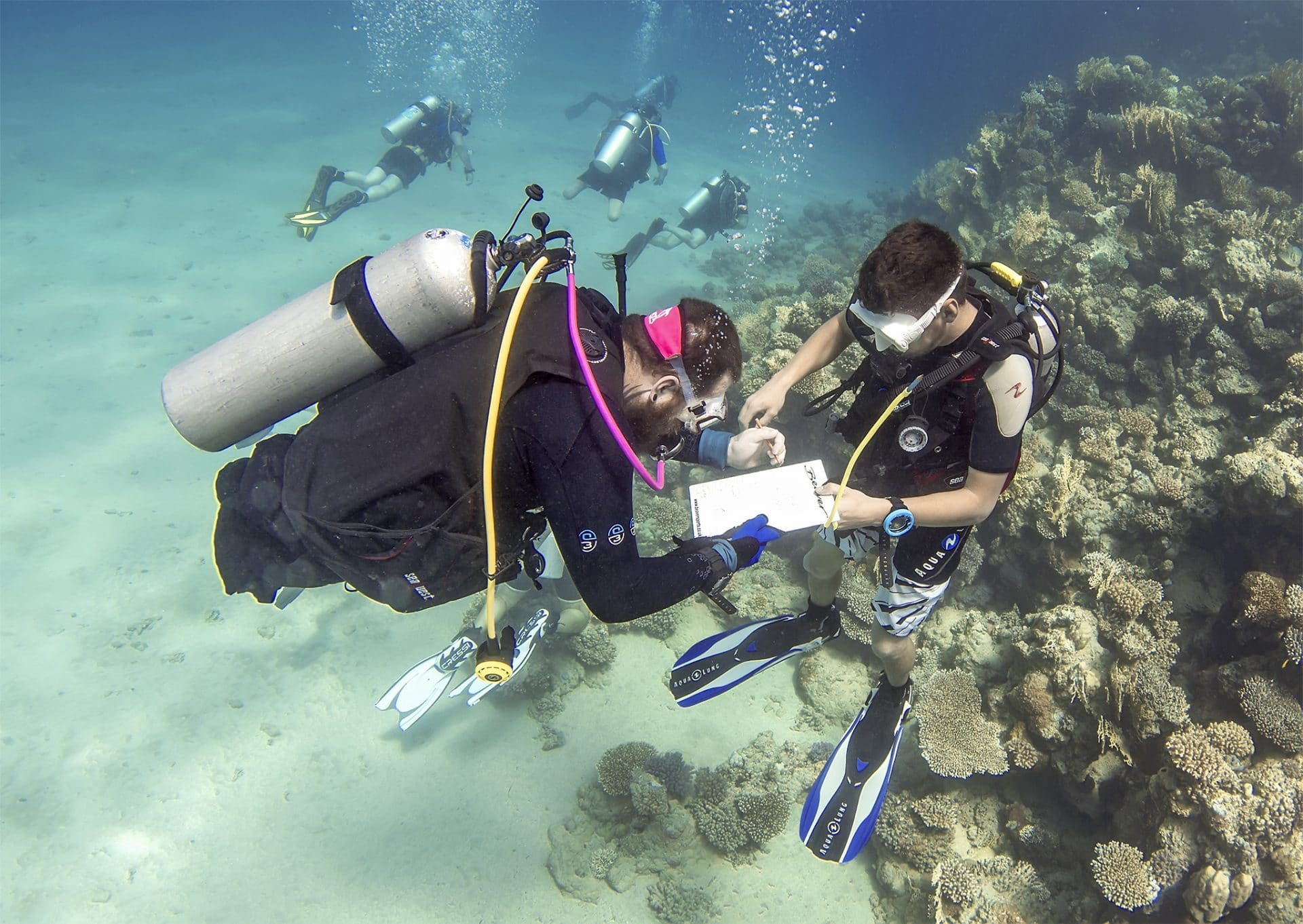 Deptherapy Veterans Help To Guide Coral Reef Conservation