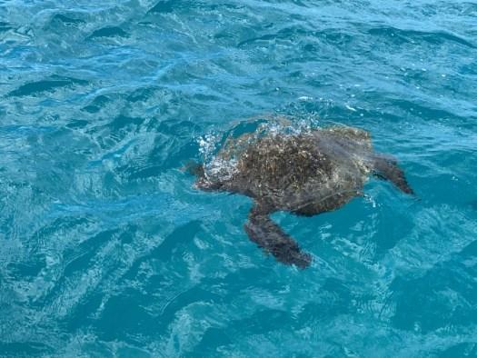 Turtle Snorkeling Tour In Waikiki