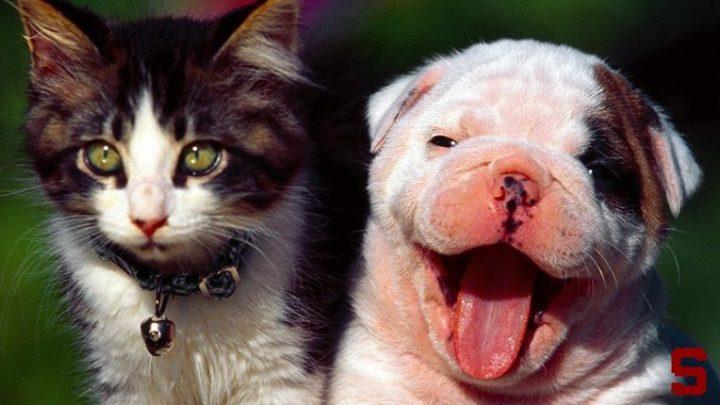 Le migliori app per prendersi cura di cani e gatti