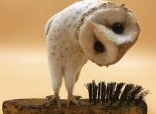Curious Owl needle felt art by Simon Brown