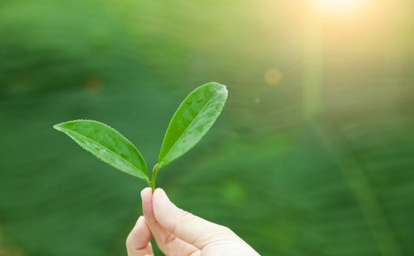 Naturopatia e ruolo del Naturopata