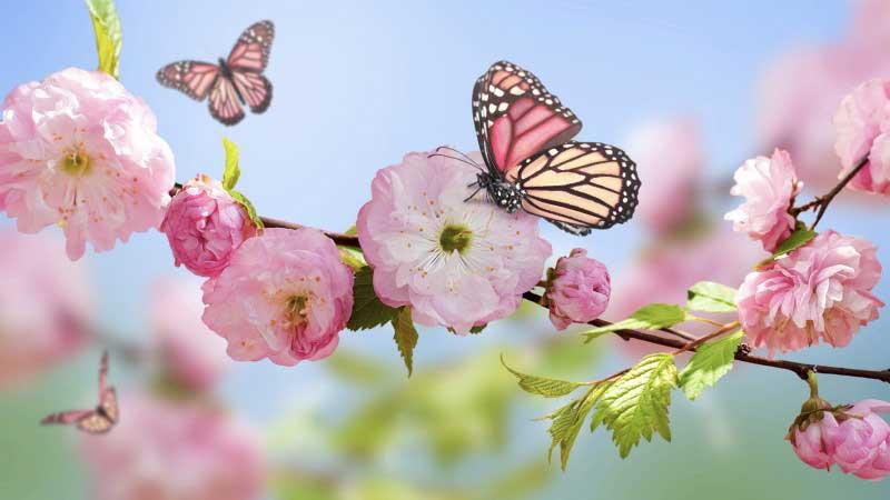 primavera naturopatia