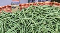Castro - Agricoltura Sostenibile Alpina Semi di Resistenza - Biodistretto ValleCamonica 2
