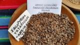 Castro - Agricoltura Sostenibile Alpina Semi di Resistenza - Raetia Bidiversità alpine 11