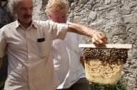 Peter Moltorni e renzo Erini durante una lezione di apicoltura con l'arnia top
