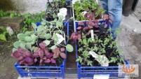 Orti_ValCodera_Scuola_Ambulante_Agricoltura45
