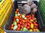 mercato agricolo diffuso di Mola di Bari - pomodori e barbabietole