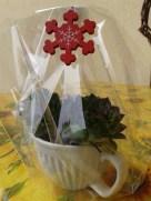 piante tazza