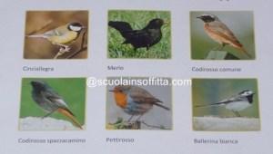 Uccelli migratori per bambini detective