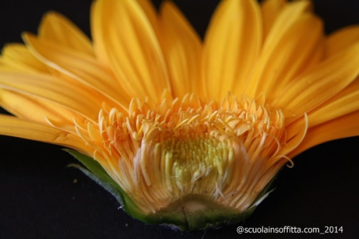 parti del fiore