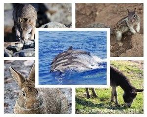 Dove si vedono gli animali in libertà?
