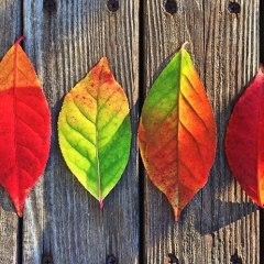 Attività Montessori per l'autunno