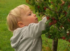 Come proporre l'educazione alimentare ai bambini con i giochi