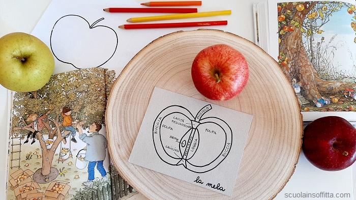 Attività con le mele per bambini