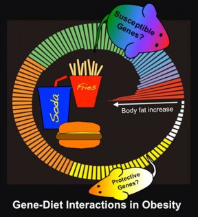uclaObesity_and_Genetics