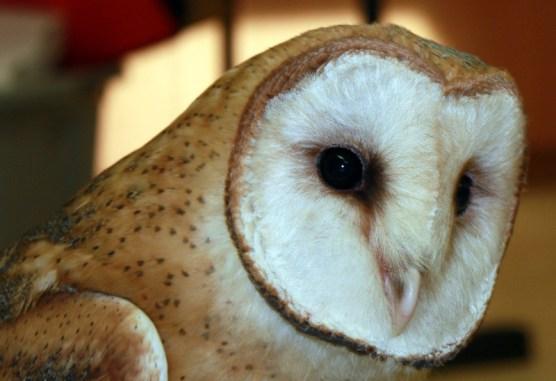 owl020413d