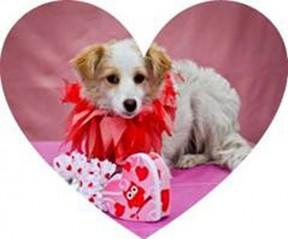 valentineheartdog