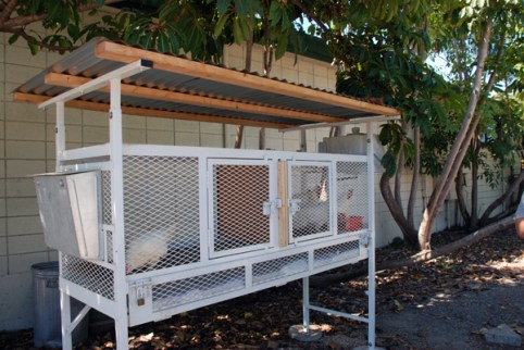 keeping our chickens safe