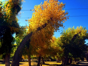 trees-color3