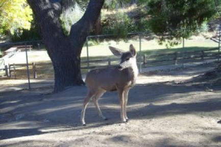 Deer Abby at Hart Park | Photo: Friends of Hart Park & Museum