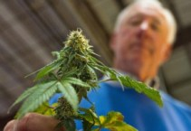 useicannabis