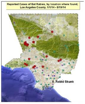 santa-clarita-continues-be-rabid-bat-leader-los-angeles-county-4