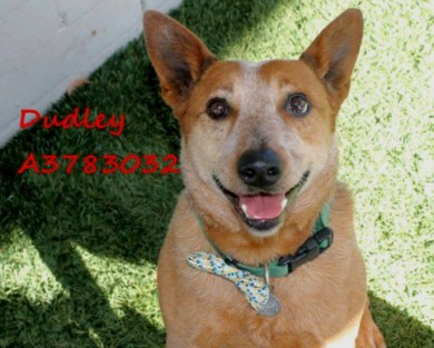 Available today from the Castaic shelter. Call 661-257-3191.