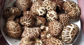 Shitake mushrooms on a plate
