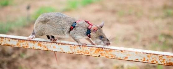 Rats9