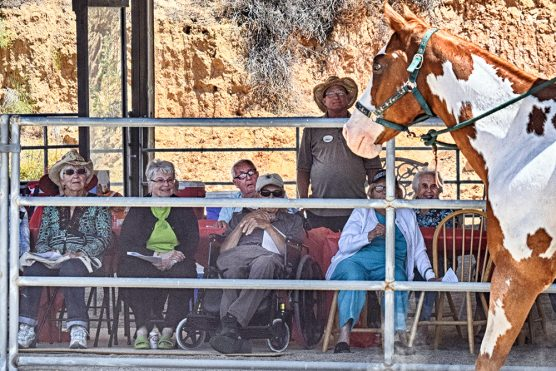 Residents of Oakmont watch Picasaso, a paint horse