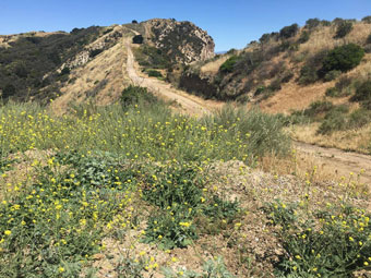 Open Space Newhall Pass