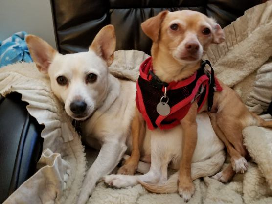 Lennon and Freeda, rescued and adopted from the LA County Animal Care and Control shelters in Baldwin Hills and Castaic shelters, respectively, are loving life in Santa Clarita